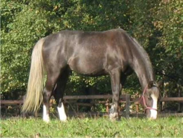 gratisinserate pferde